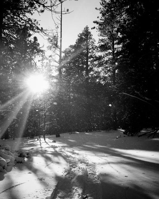 A snowshoe track through Colorado snow.