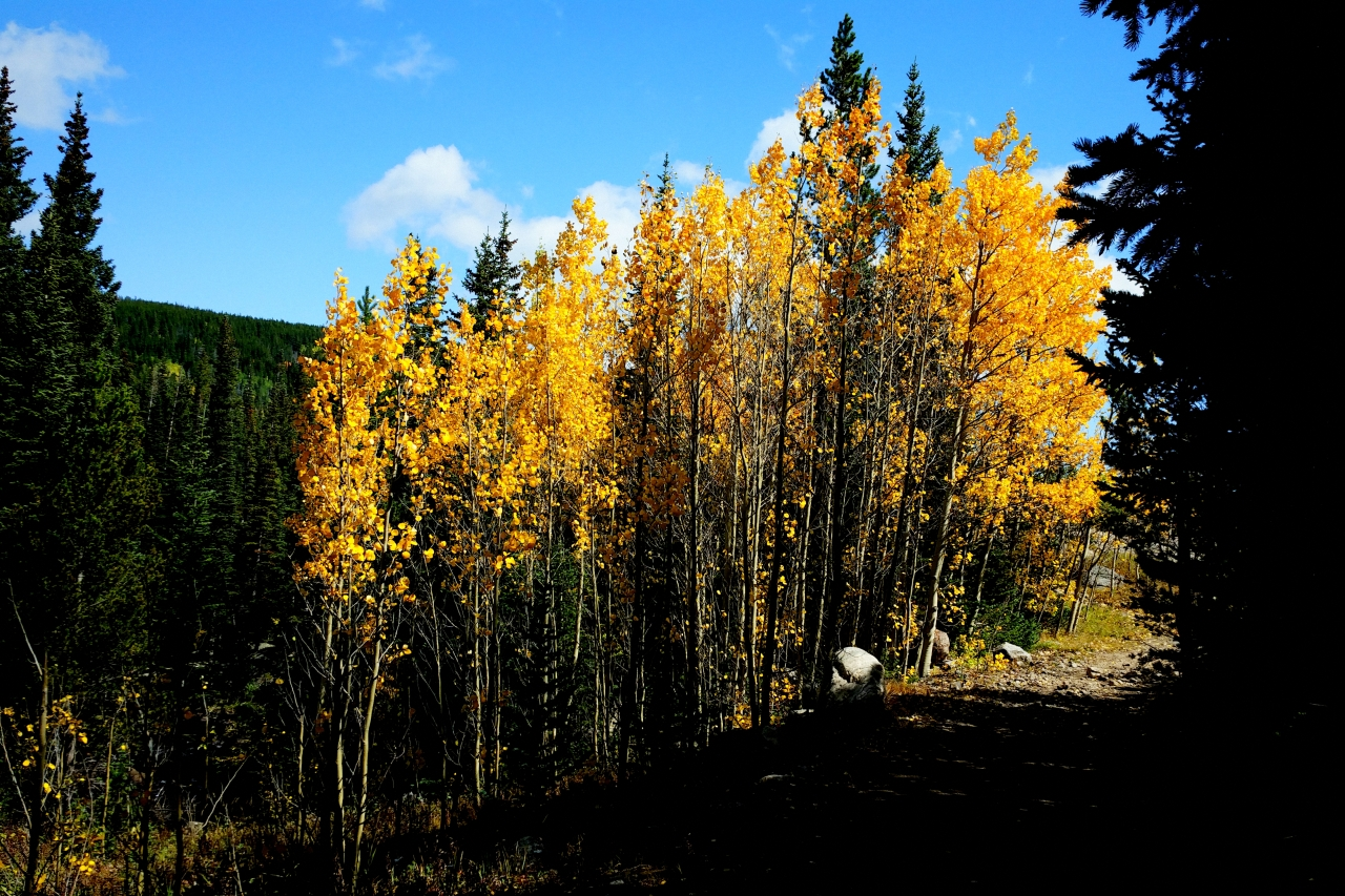 5 Easy Tips for Colorado Leaf Peepers