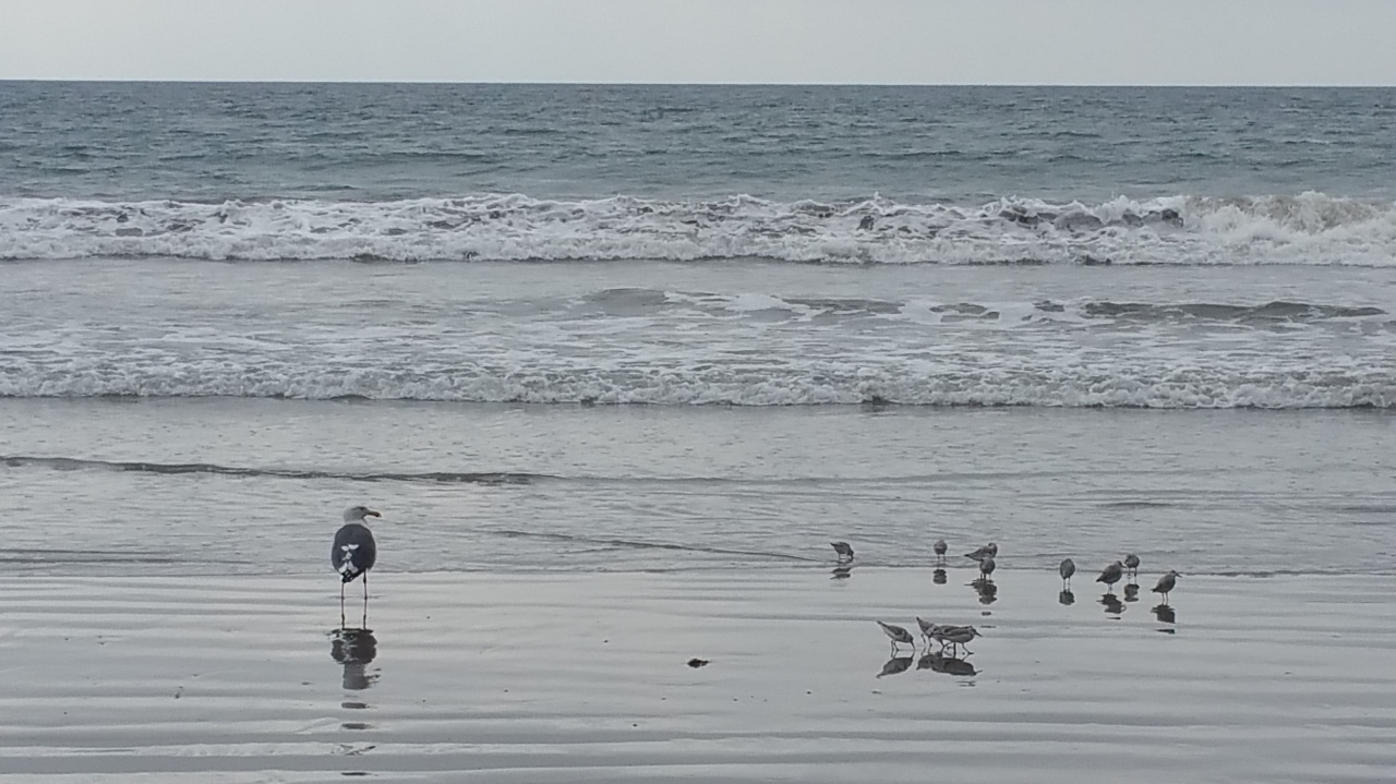 The Pacific Ocean with seagulls